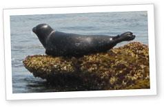 Mr. Seal